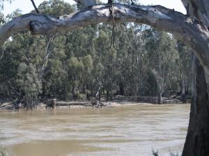 The Murray near Swan Hill.