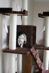 Half-way up the cat tree.